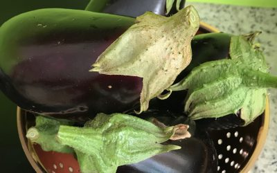 Eggplant Patties